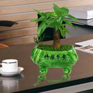 竹树盆栽图片名称大全